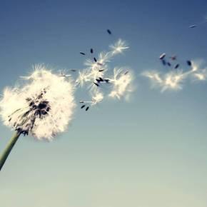 El viento lo llevará – Por ClaudiaGorenstein