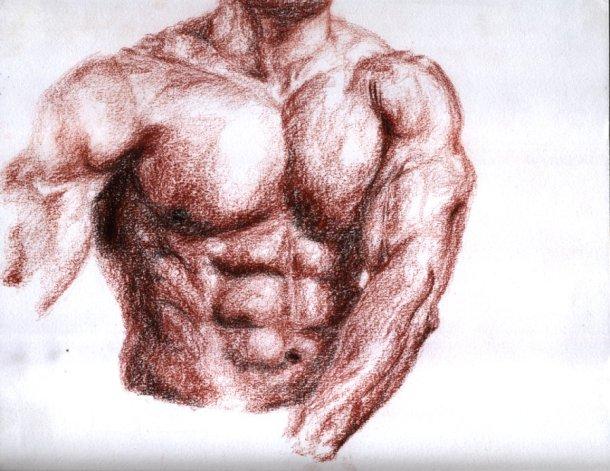 torso-en-sanguina